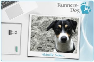 news-beitragsbild-runners-dog